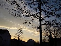 IMG_9665 (germancute) Tags: nature outdoor arnstadt thuringia thüringen park wildflower wiese schlossgarten