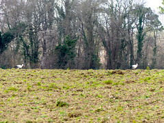 Vues depuis notre jardin! (Marie-Hélène Cingal) Tags: cagnotte landes 40 paysdorthe aquitaine nouvelleaquitaine france sudouest