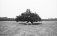 (Attila Pasek (Albums!)) Tags: bugacikontaktfotográfiaitábor analogue blackandwhite group orwo ricoh kr5 bugac camera bw tree pf2 35mm film field