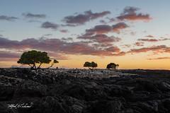 Mahai'ula Sunset_27A8217 (Alfred J. Lockwood Photography) Tags: alfredjlockwood nature landscape sunset twilight dusk volcanicrock lavarock clouds sky mahauiulabeach bigisland hawaii kekahakaistatepark winter