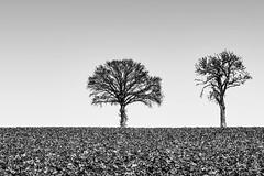 C'est étrange, les arbres, en hiver. (Pyc Assaut) Tags: immobiles sombres décharnéssurfonddecielblancetterne décharnés sur fond de ciel blanc et terne cestétrange lesarbres enhiver itsstrange trees inwinter noirblanc black white blackwhite pyc5pyc pyc5pycphotography pycassaut pierreyvescugni pierreyvescugniphotography extérieur nikonz6 nikon z6 minimal minimalisme