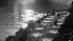 shiny glasses (serge der) Tags: italie italy italia florence firenza arno river traiteur repas noirblanc blacwhite water