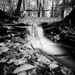 On the trail to Linda Falls (seth.michael.kelly) Tags: ilforddelta100 blackandwhitefilmphotography pinhole zeroimage2000 waterfallcascade cvnp ohio cuyahogavalleynationalpark lindafallstrail fall autumn leaves longexposure filmisnotdead stream pinholecamera 6x6 thefindlab bedfordreservation