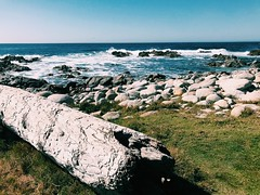 pacific grove (vhickey25479) Tags: pacificgrove ocean
