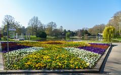 Eingang zum Stadtgarten/Zoo (KaAuenwasser) Tags: nancyhalle eingang zoo stadtgarten blumen beet anlage park garten bepflanzung stiefmütterchen gänseblumen bunt farben baum bäume pflanzen blüte blüten blütenmeer weg wege