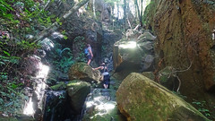 The way up (Tony Markham) Tags: missinghamsteps budderoonationalpark kangarooriver wet slippery steep dangerous rainforest fungi fungus pleurotus