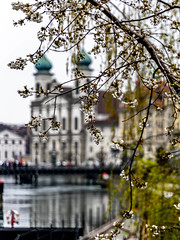 Spring in Lucerne (cs_one) Tags: water bokeh blur tree building bridge church blossom flower luzern city travel reuss background swiss cantonlucerne spring historic sightseeing lucerne switzerland oldtown river tower outdoors nature architecture fresh bloom europe spire branch
