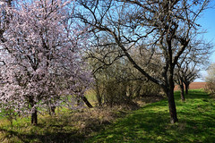 La renaissance de la nature (Excalibur67) Tags: nikon d750 sigma globalvision art 24105f4dgoshsma paysage landscape flowers fleurs arbres trees printemps spring frühling floraison campagne