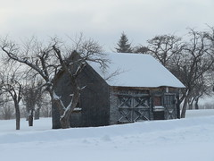 In an old orchard (yooperann) Tags: old building barn outbuilding orchard fruit trees snow cloudy day marquette county upper peninsula michigan