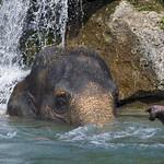 Elephant welness thumbnail