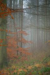 Morning woodland mist (smithson2430) Tags: duncombe mist fog helmsley northyorkshire