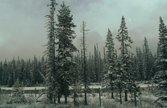 Canadian Rocky Mountains HSS (Mr. Happy Face - Peace :)) Tags: sky sun cloud mountains albertabound canada yoho nationalpark cans2s nature trees forest spring art2019 snow lakelouise hff fence