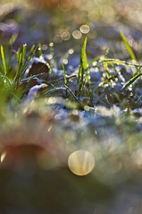 November frost (Stefano Rugolo) Tags: stefanorugolo pentax k5 pentaxk5 kmount smcpentaxm100mmf28 ricohimaging verticalformat bokeh november frost grass dew depthoffield lowangle persepctive pov abstract light manualfocuslens manualfocus manual vintagelens