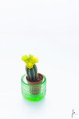 Little cactus (jannaheli) Tags: suomi finland helsinki tuotevalokuvaus productphotography kaktus cactus nikond7200 valaisu strobist kotistudio homestudio plant kasvi kukka flower nature luonto iittala kastehelmi kynttilälyhty