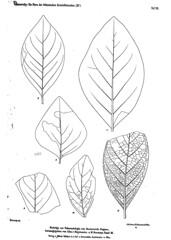 beitrgezurpal03wien_0229 (kreidefossilien2) Tags: velenovský bohemiancretaceousbasin bohemian czech republic palaeobotany flora kieslingswalde