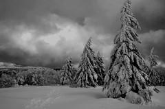 Fantômes d'hiver  -  Winter ghosts (Philippe Haumesser (+ 7000 000 view)) Tags: snow arbres tree trees hiver winter sky paysages landscape landscapes vosges nikond7000 d7000 nikon reflex 2019 neige arbre paysage ciel nuages clouds noiretblanc blackandwhite monochrome