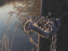 FROSTY MORNING IN FEBRUAR2019 P2160228 (hlh 1960) Tags: frosty frost winter februar nagel holz wasser water river pfosten kristalle nature natur stille stillness weis whit cold kalt glitzer sunny sonnig bokeh spiegelung mirrow draht metall