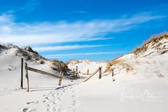 Path (wanderlust octopus) Tags: 2019 conservation dunegrass dunepreservation dunes environment february islandbeachstatepark jerseybeach jerseyshore naturalhabits newjersey parks paths winter beach