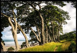 Holidays Waihi