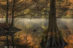 I Go Back (keith_shuley) Tags: dawn redbudisle mist mistymorning misty orange cypress austin texas texashillcountry