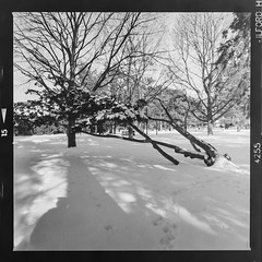 Gage park in the winter #4 (Micah Bowerbank Photography) Tags: hamilton ontario canada ca
