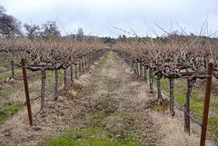 Ironstone Winery, Murphy's CA (benjaminfish) Tags: foothills california gold country calaveras february 2019 winter