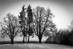 Wintertime@Bavaria (:: Blende 22 ::) Tags: deutschland germany winter bayern wintertime clouds cloudy wolken bewölkt sonne sun sunshine gegenlicht backlight trees bäume snow schnee wonderland canoneos5dmarkii black white blackandwhite blackwhite bw allgäu oberstaufen winterwonderland canonef70200mmf4lisiiusm