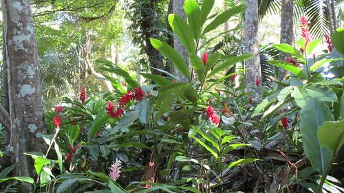Jamaica -  Ocho Rios: Fascination of the tropical rainforest