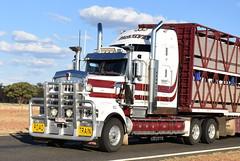 McKelvey Livestock Haulage - Kenworth T909 (Scottyb28) Tags: kenworth t909 truck trucks trucking highway haulage loaded diesel livestock stockcrate interstate queensland