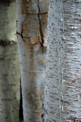 dripping with life (she, myself and eye) Tags: eechillington nikond7500 bellscanyon nature trees hiking