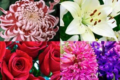 The 17 Common Stereotypes When It Comes To Each Flower Meaning   each flower meaning (franklin_randy) Tags: flower meanings each meaning