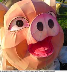2019-02-31A 1035 New Taipei City Chinese Lantern Festival 2019 (Badger 23 / jezevec) Tags: dragon dragonboat festival taiwan history culture travel tourism duanwufestival zhongxiaofestival 忠孝節 龍船節 龍舟節 端午节 端午節 龍舟 龙舟 龍船 龙船 taipei ֵ台北 臺北市 taipeh taןpeh ταϊπέι 타이페이 тайбэй 台北市 ტაიბეი تايبيه taibei đàibắc taipé tchajpej rowing sports boat barco шлюпка 배 ボート barca βάρκα bateau 小船 člun veneillä csónak łódź boating vessel photo picture image watersports watercraft asia tradition teamwork water 大佳河濱公園 dajiariversidepark