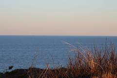 Dune Grass (NatureChaserPhotos) Tags: marconi wellfleet capecod trees sunset beach dune dunegrass sky ocean nature