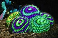 Electric Desert (joeksuey) Tags: electricdesert desertbotanicalgarden lights color klipcollective phoenix arizona joeksueydisplay cactisynesthesia cacti saguaros goldenbarrel crystal rocks cholla 2019 sonoranpassage purple video