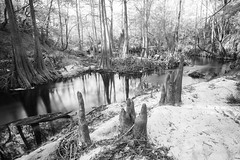 Sopchoppy River (J. Parker Natural Florida Photographer) Tags: floridatrail floridanationalscenictrail river water sopchoppy sopchoppyriver longexposure ndfilter neutraldensityfilter vsco vscofilm florida panhandle outdoor landscape scenic nature naturalbeauty cypress woods forest apalachicolanationalforest monochrome blackandwhite
