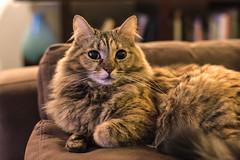 Lara (CraDorPhoto) Tags: canon6d pets animals cats domesticanimals
