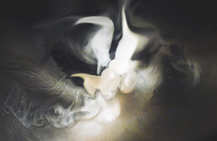 When Cats' Play (Abstract) (Steve Taylor (Photography)) Tags: cat swirls eddy smoke playing animal brown white odd strange asia singapore