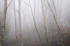 Foggy Forest Park-5 (kephart_kyle) Tags: 2019 foggy fog foliage forest hike january mist moss northwest nw oregon pacific park pnw portland rainforest winter