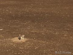February 2, 2019 - A prairie dog enjoys the warm weather. (LE Worley)