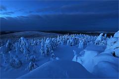 Winternight (Sandra OTR) Tags: finland finnland lappland lapland schnee winter nacht polarnacht polar trees tykky blue nachts wohnen häuser beleuchtung licht urlaub weihnachten