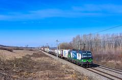 WLC 193 237, Nickelsdorf (Paha Bálint) Tags: wlc br193 siemensvectron vectron austria freighttrain train güterzug