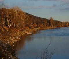 rive fluviali (archgionni) Tags: fiume river po piemonte italia italy acqua water azzurro blue cielo sky alberi trees natura nature