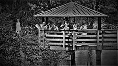 crowded (Pedro1742) Tags: blackandwhite people reflections hats shutterbugs birdwatchers