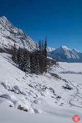 Roadtrip 28 (Kasia Sokulska (KasiaBasic)) Tags: canada alberta winter rockies travel mountains nature jasper np landscape