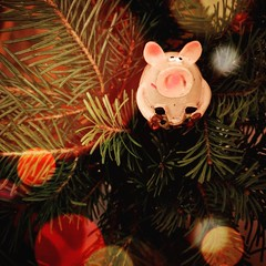 New Year Driver:) #newyear #pig #symbol #decoration #fir #glam #samsungnote9 #samsungphotography (N.A. Dikin) Tags: newyear symbol glam samsungnote9 samsungphotography decoration fir pig