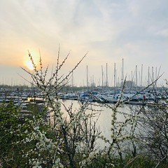 N° 202 (VictorCharlyCharly) Tags: blackthorn blossom sunset yachts harbor denosse thenetherlands