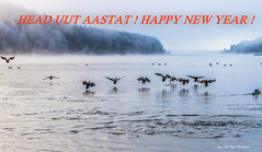 "Head uut aastat -Happy new year ! (Igor ""Ixa"" Nael) Tags: happunewyear headuutaastat linnud veelinnud pardid duck ducks talv winter viljandijärv lakeviljandi lake snow härmatis estonia bird"