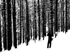silhouettes (m_big_b) Tags: germany oberstdorf bavaria photographer forest snow trees winter