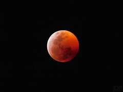 Red Moon (joseluissaucedo) Tags: redmoon moon luna mexico noche eclipse supermoon bloodmoon stars totaleclipse night 2019