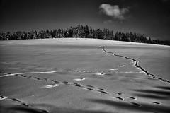Wildspuren auf den Feldern (Helmut Reichelt) Tags: bw sw wildspuren spuren felder schnee viel sonne winter februar schwaigwall oberbayern bavaria deutschland germany leica leicam typ240 captureone12 silverefexpro2 leicasummilux35mmf14asphii